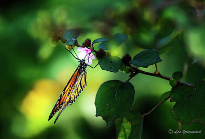 Photograph - Butterfly With Flower by Les Greenwood