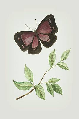 Mixed Media - Butterfly With Leaf By Cornelis Markee 1763 by Cornelis Markee