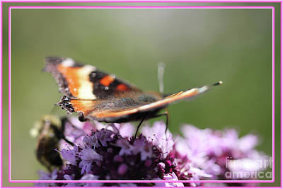 Digital Art - Butterfly With Pink Accents by Donna Munro