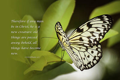 Photograph - Butterfly With Scripture by Joni Eskridge