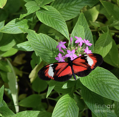 Photograph - Butterfly World 2 by Nancy Chambers