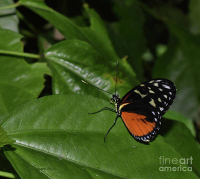 Photograph - Butterfly World by Nancy Chambers