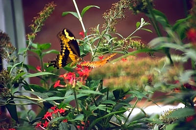 Butterfly World Watercolor 2 Art Print by Steve Ohlsen