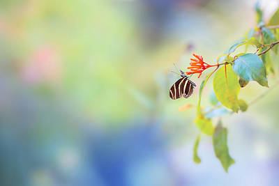 Canon Eos 5d Mark Iii Photograph - Butterfly by Yuri Figuenick