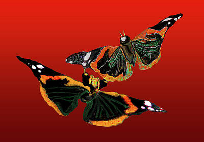 Painting - Butterfly1 by Martin Hardy