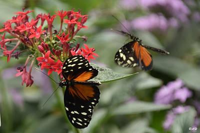 Butterfly2 Art Print by Ron Hebert