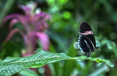 Butterfly3 Art Print