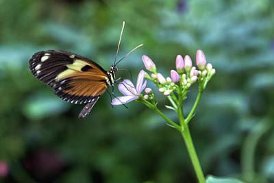 Butterfly4 Art Print