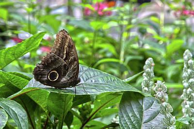Butterfly5 Art Print
