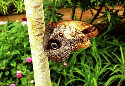 Butterfly's Eyes Art Print