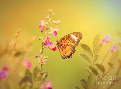 Butterly In The Morning Original