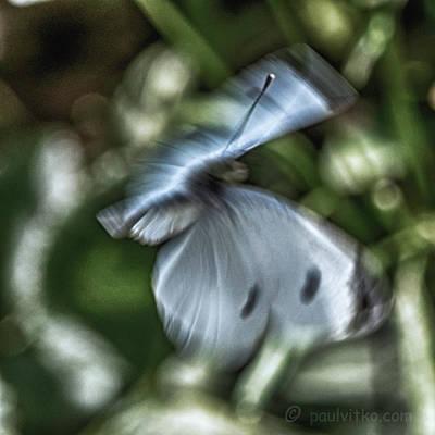 Photograph - Butternightfly..... by Paul Vitko