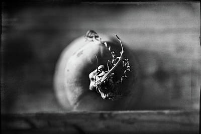 Squashes Photograph - Butternut Face Off by Susan Capuano