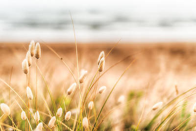 Sea Grass Photograph - Button Grass by Jonathan Williams