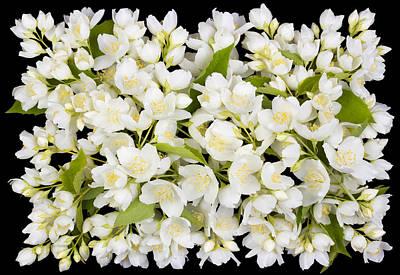 Buttonhole From White  Jasmine Flowers Art Print by Aleksandr Volkov