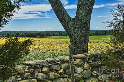 Buttonwood Farm Photograph - Buttonwood Farm by Edward Sobuta