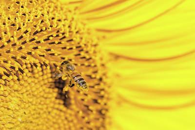 Photograph - Bee Lives Matter by Deb Buchanan