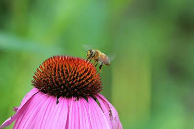 Photograph - Buzz by David Stasiak