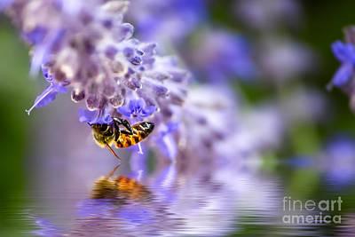 Photograph - The Buzz by Susan Warren