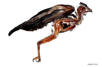 Bird Brain Photograph - Buzzard Anatomy - Sheet Plastinate by Christoph Von Horst