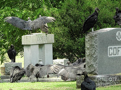 Photograph - Buzzards Of Smithfield by Melissa Messick