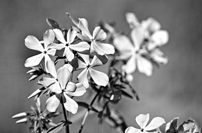 Photograph - Bw Flowers by Monica Whaley