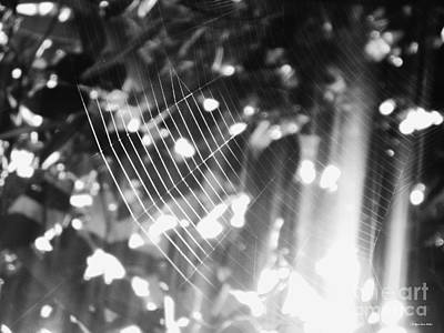 Photograph - Bw Gossamer Glow by Megan Dirsa-DuBois