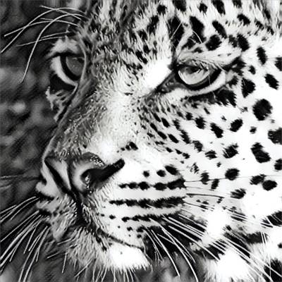 Photograph - Bw Leopard  by Gini Moore
