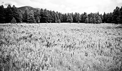 Photograph - Bw Meadow by Scott Sawyer