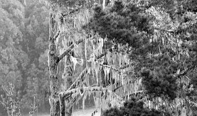 Photograph - Bw Moss Tree  by Brent Dolliver