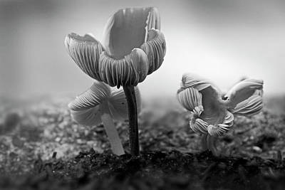 Photograph - Bw Mushroom - 365- 232 by Inge Riis McDonald