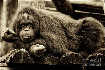 Bw Orangutan Art Print