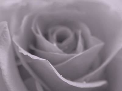 Bw Rose  Art Print by Juergen Roth