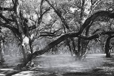 Photograph - Trees And Fog Series 01  by Carlos Diaz