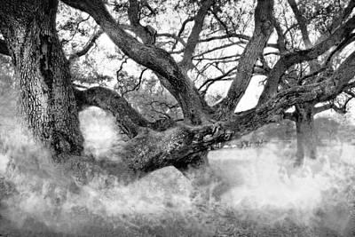Photograph - Oak Tree Series 02 Bw by Carlos Diaz