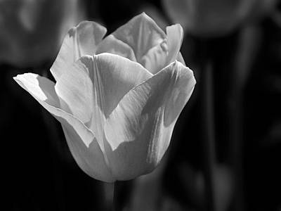 Photograph - Bw Tulip - 365-26 by Inge Riis McDonald