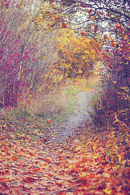 Photograph - By Autumn Path 1 by Jenny Rainbow