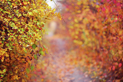 Photograph - By Autumn Path by Jenny Rainbow
