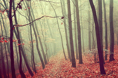 Photograph - By Misty Autumn Path by Jenny Rainbow