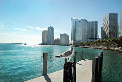 Miami Skyline Photograph - By The Bay by Maria Andrade