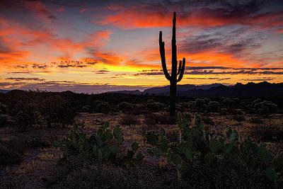 Photograph - By The Desert Dawn Light  by Saija Lehtonen
