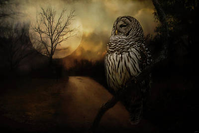Photograph - By The Light Of The Full Moon Owl Art by Jai Johnson