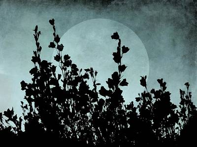 Photograph - By The Light Of The Moon by Patricia Strand