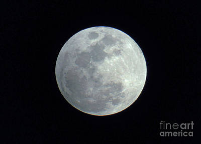 Photograph - By The Light Of The Silver Moon by D Hackett