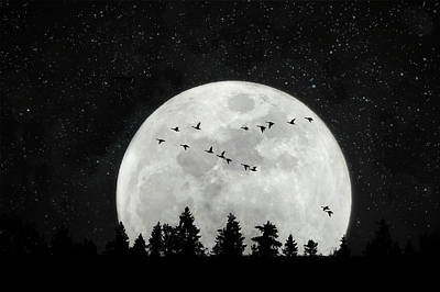 Photograph - By The Light Of The Silvery Moon - Birds  by Andrea Kollo