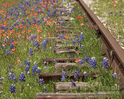 Photograph - By The Tracks by Cathy Alba