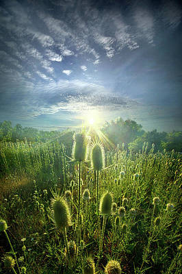 Photograph - By Virtue Of Its Own Existence by Phil Koch