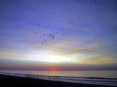 Photograph - Bye Bye Blackbird by Betty Buller Whitehead