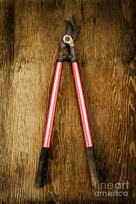 Pruning Photograph - Tools On Wood 1 by YoPedro