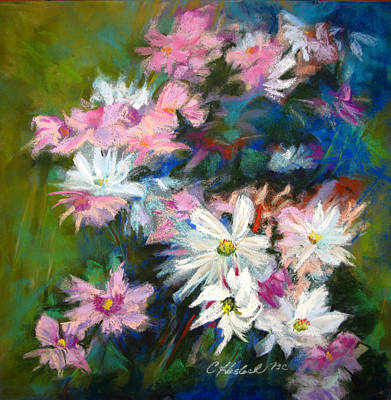 Pastel - C And D  Cosmos And Daisy That Is by Carole Haslock